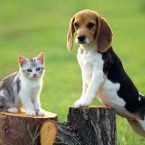 Suņiem un kaķiem